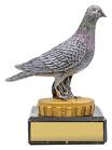 Pigeon Marble